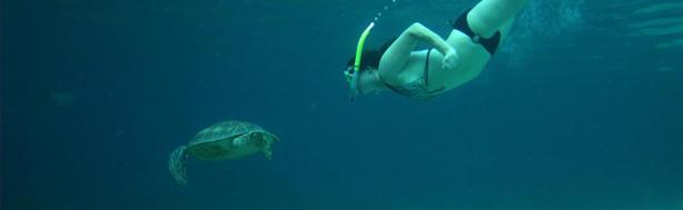 Combo Dive & Snorkel