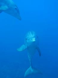 Aquarium Dives