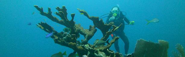 Diving with belizemagicaladventures.com