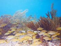 Snorkeling School of Fish