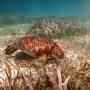 BelizeMagical Snorkel0000