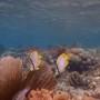 BelizeMagical Snorkel0001