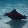 BelizeMagical Snorkel0004