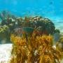 BelizeMagical Snorkel0005