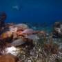 BelizeMagical Snorkel0006