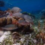 BelizeMagical Snorkel0007