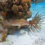 BelizeMagical Snorkel0009