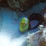 BelizeMagical Snorkel0010