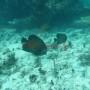 Bj Dive In Esmaralda 001