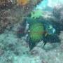 Bj Dive In Esmaralda 002