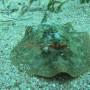 Bj Dive In Esmaralda 005