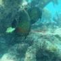 Bj Dive In Esmaralda 006