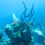 Bj Dive In Esmaralda 062