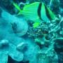 Bj Dive In Esmaralda 070